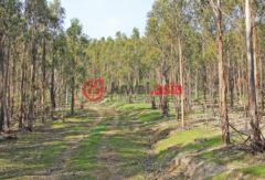 澳大利亚维多利亚州Romsey的乡郊地产,702 chintin road,编号26830104